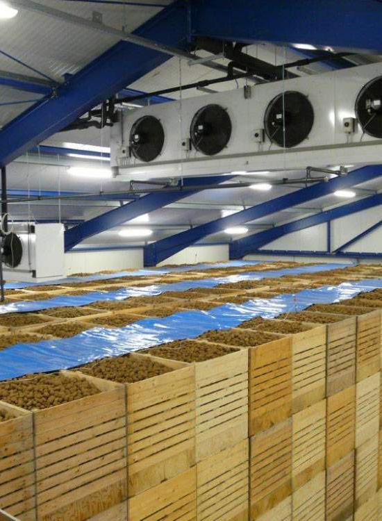 Вентиляция для овощехранилища